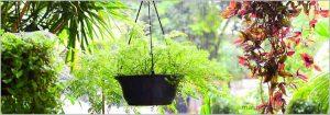 Best Plants for Delhi NCR, Temperature 1°C – 5°C, USDA Zones 10 -13