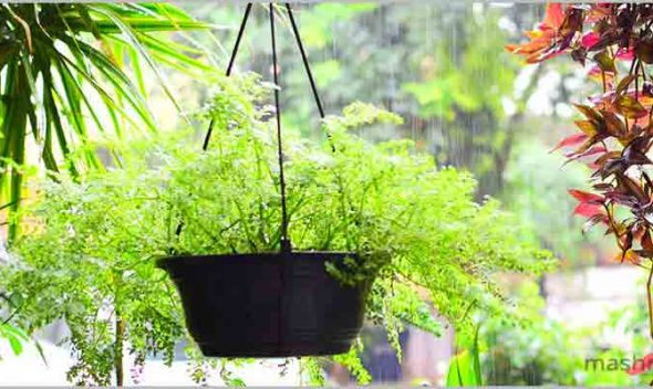 Best Plants for Delhi NCR, Temperature 1°C – 5°C, USDA Zones 10 -13