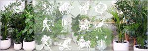 Best zodiac plants – find lucky plant for your rashi zodiac sign