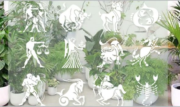 Best zodiac plants - find lucky plant for your rashi zodiac sign