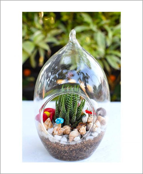 Bird Nest Oval Type Terrarium with Haworthia and Deco Mates