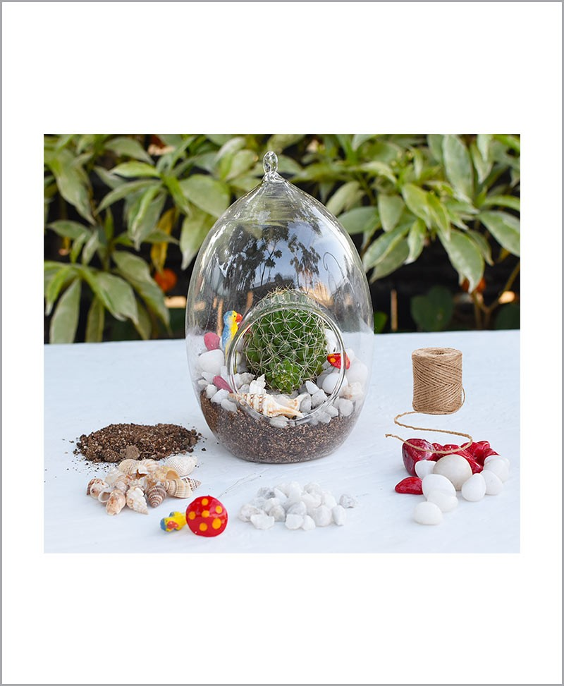Bird Nest Oval Type Terrarium with Cactus Plant and Deco Mates