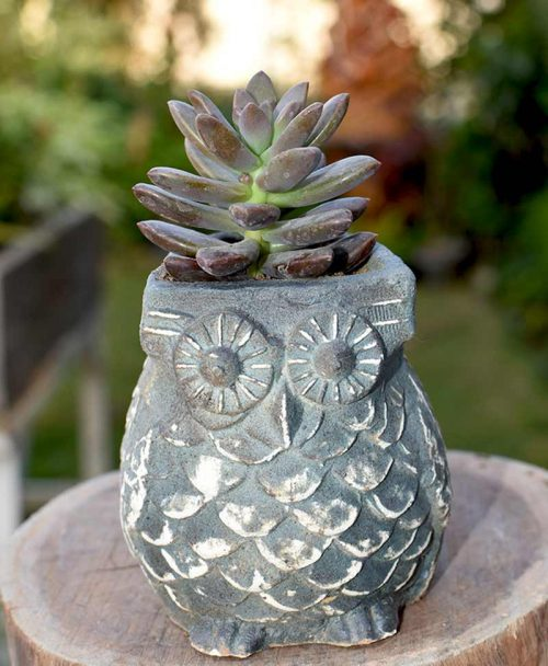 Ceramic Blue Owl with Succulents