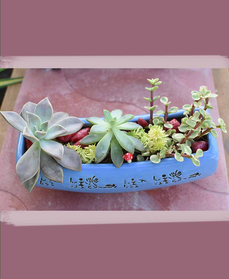 Ceramic Succulents Tray 1