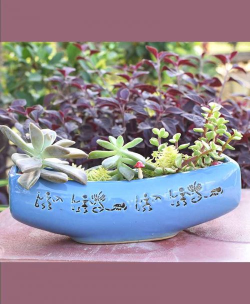 Ceramic Succulents Tray
