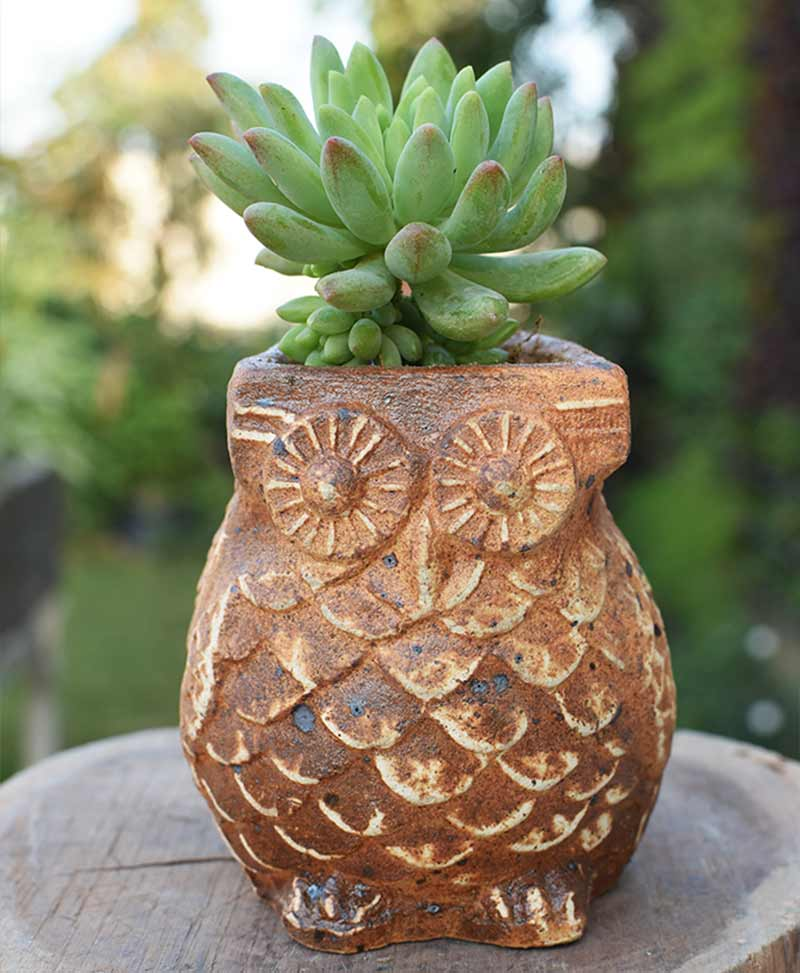 Ceramic Brown Owl with Succulents