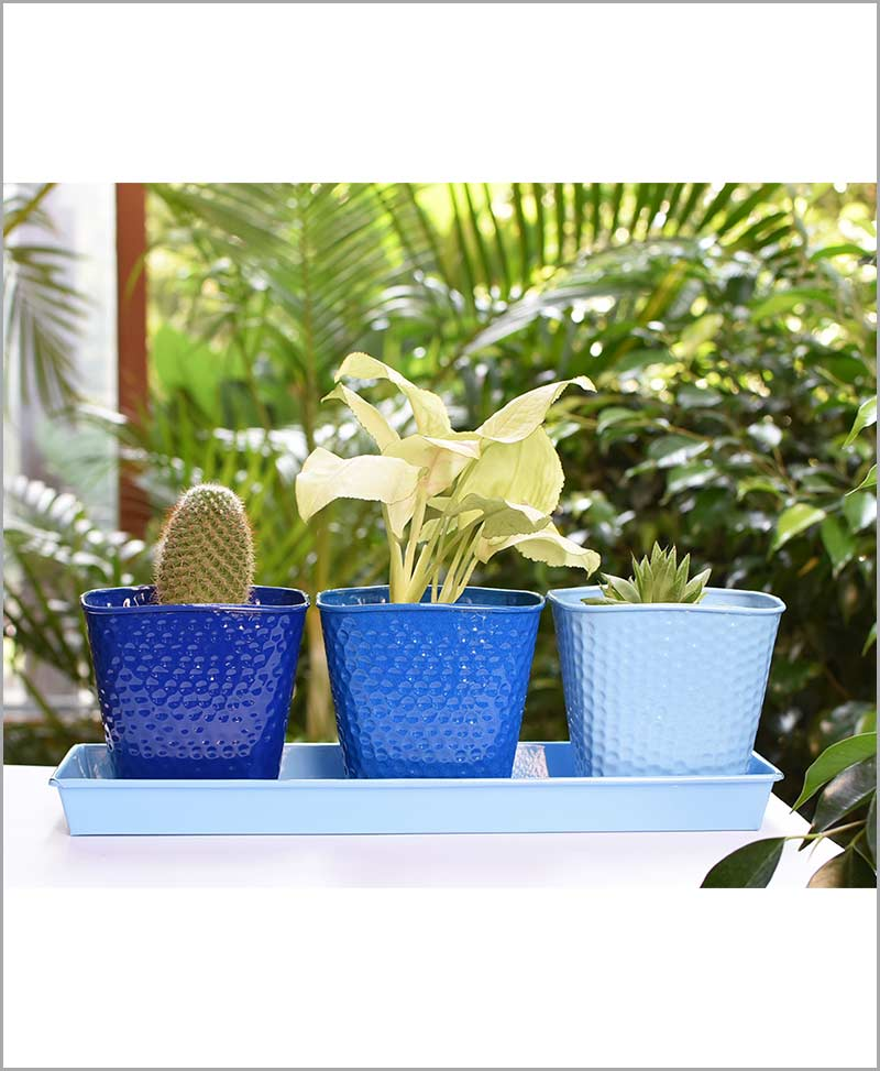 Metal 3 Planters Set with Tray Blue