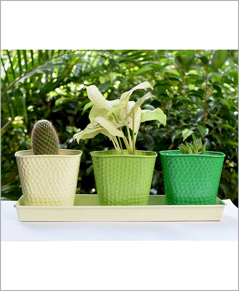 Buy Metal 3 Planters Set with Tray Green