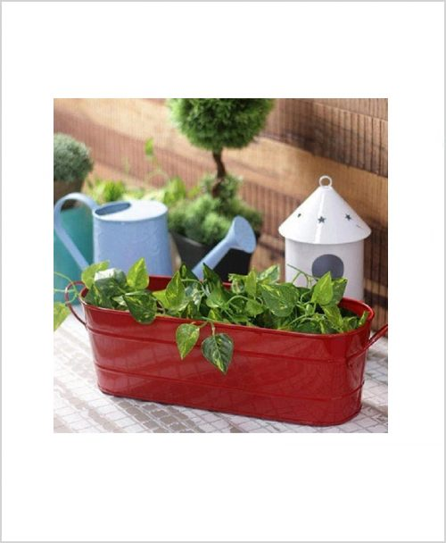 Buy Metal Oval Planter Big Red