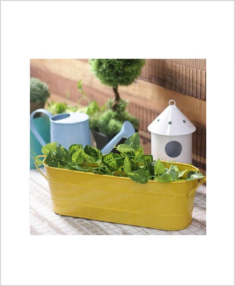 Buy Metal Oval Planter Big Yellow