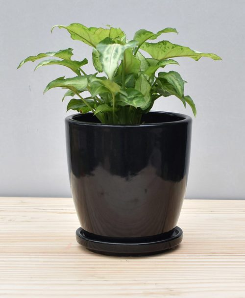 Ceramic 4 inch Oval Pot Black