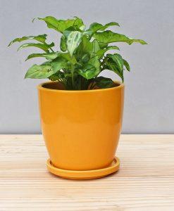 Ceramic 4 inch Oval Pot Mustard Yellow