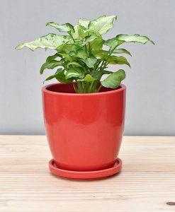 Ceramic 4 inch Oval Pot Red