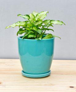 Ceramic 4 inch Oval Pot Sea Green