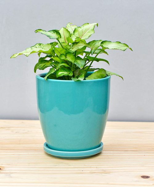 Ceramic 4 inch Oval Pot Sea Green