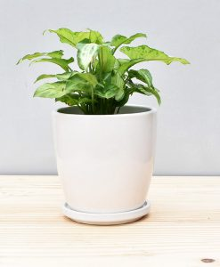 Ceramic 4 inch Oval Pot White