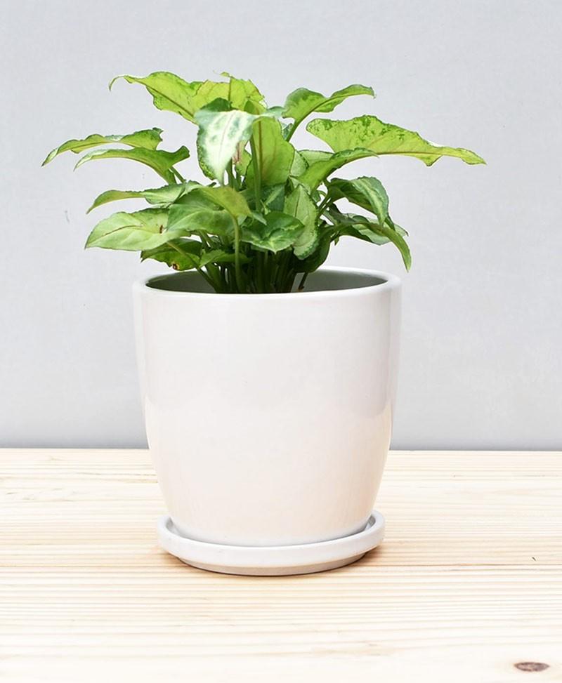 Ceramic 4 inch Oval Pot White
