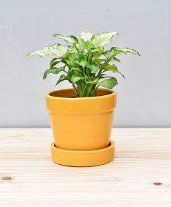 Ceramic Band Pot 4 inch Mustard Yellow