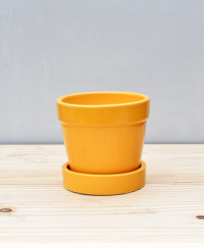Ceramic 4 inch Band Pot Mustard Yellow