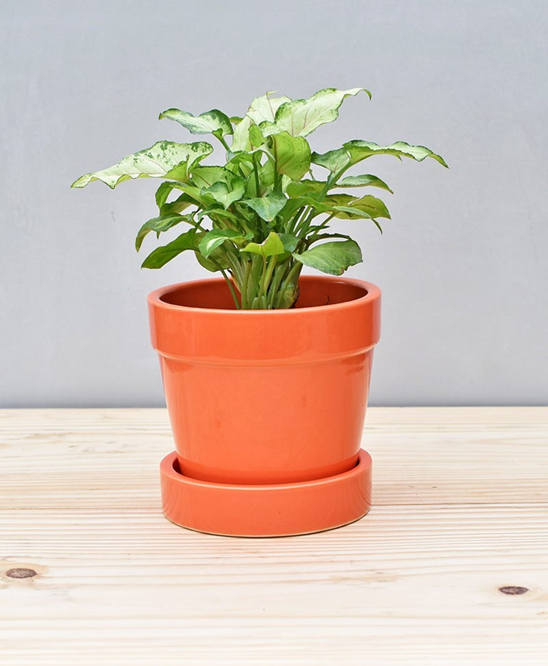 Ceramic 4 inch Band Pot Orange