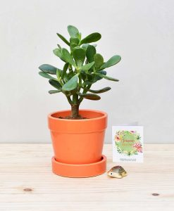 Ceramic Band Pot Orange with Jade Plant Fatty Leaves