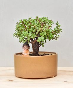 Shop Bonsai Tray Planters Gurgaon Delhi Noida India