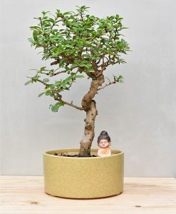 Ceramic Bonsai Tray Round 10 inch Pastel Green