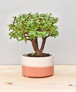 Ceramic Bonsai Tray Round 7 inch Coral