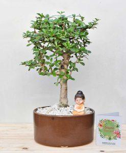 Ceramic Bowl Tray Pastel Brown with Carmona Microphylla Bonsai 2