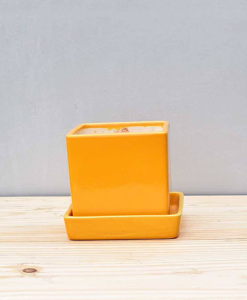 Ceramic Cube 4 inch with Plate Mustard Yellow