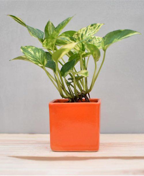 Ceramic Cube Pot 3 inch Orange