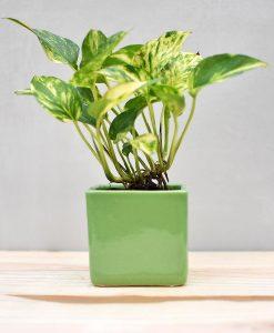 Ceramic Cube Pot 3 inch Parrot Green
