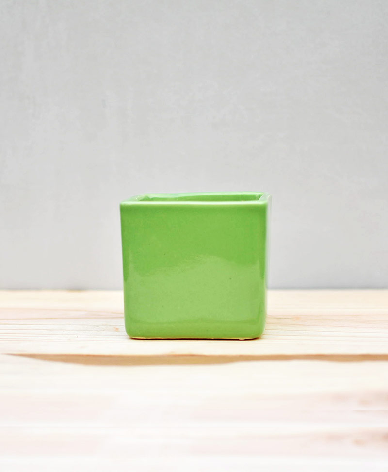 Ceramic Cube Pot Parrot Green 3 inch