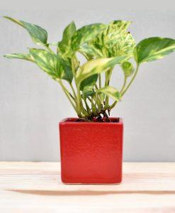 Ceramic Cube Pot 3 inch Red