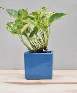 Ceramic Cube Pot 3 inch Sky Blue