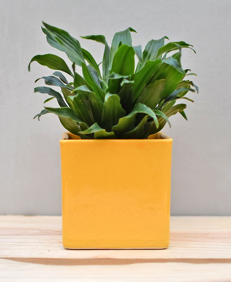 Ceramic Cube Pot 4 inch Mustard Yellow