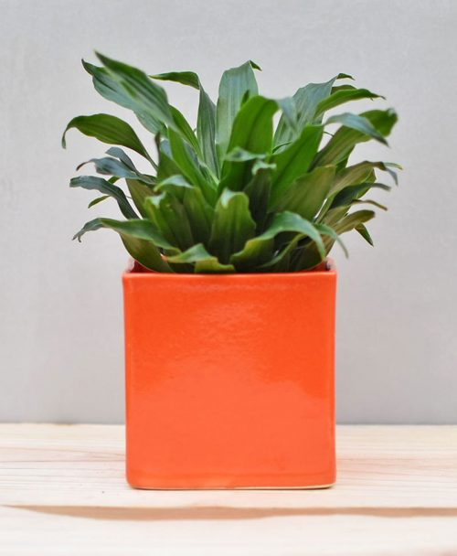 Ceramic Cube Pot 4 inch Orange