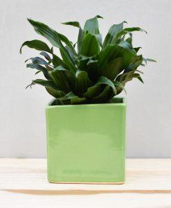 Ceramic Cube Pot 4 inch Parrot Green