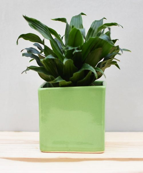 Ceramic Cube Pot 4 inch Parrot Green