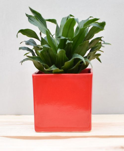 Ceramic Cube Pot 4 inch Red