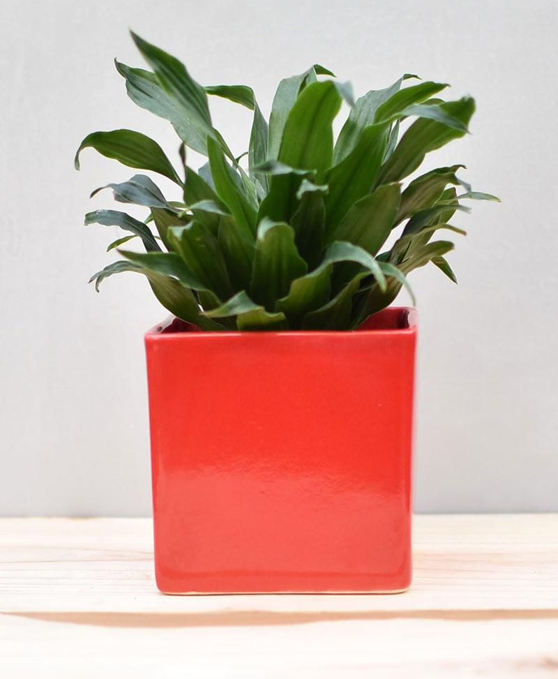 Ceramic Cube Pot 4 inch Red