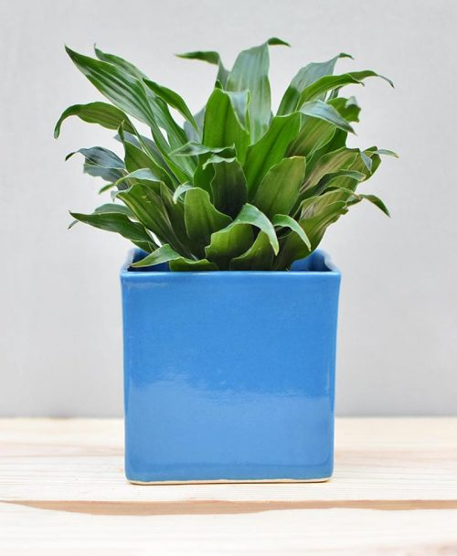 Ceramic Cube Pot 4 inch Sky Blue