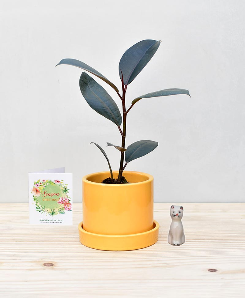 Ceramic Cylindrical Pot Mustard Yellow with Rubber Plant