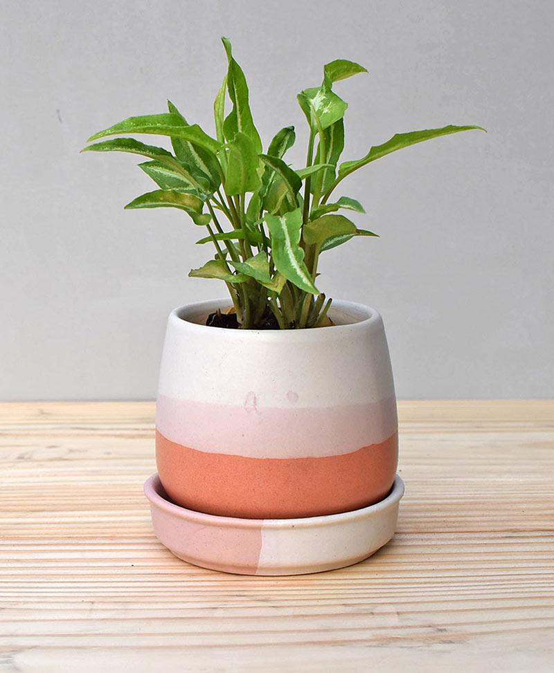 Ceramic Jar Pot 3 inch Coral