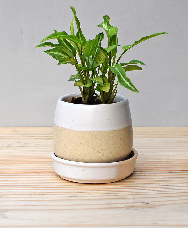 Ceramic Jar Pot 3 inch Pastel Beige