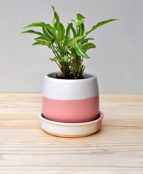 Ceramic Jar Pot 3 inch Pastel Pink