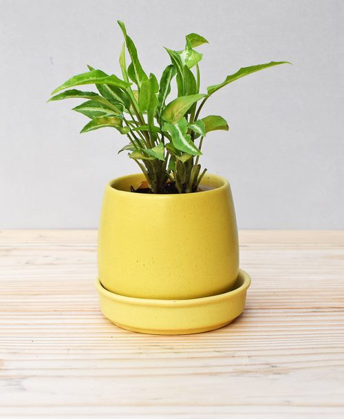 Ceramic Jar Pot 3 inch Pastel Yellow