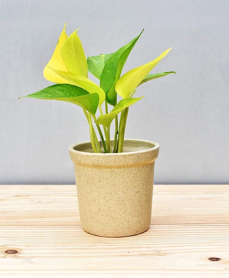 Ceramic Rim Pot  4 inch Beige