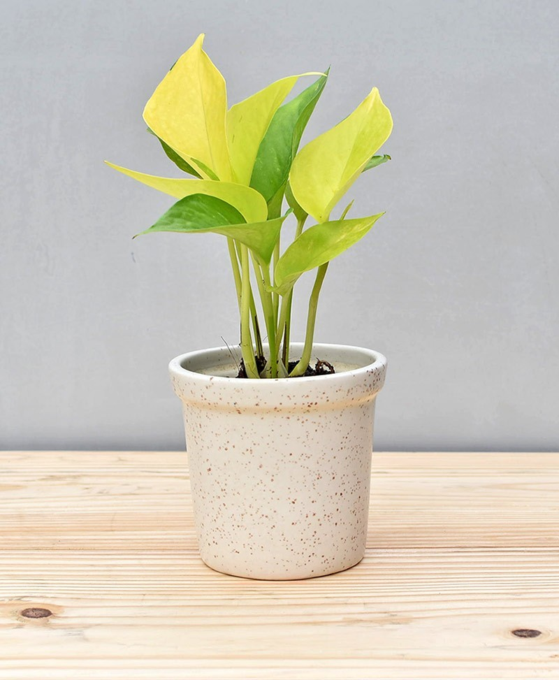 Ceramic Rim Pot 4 inch White