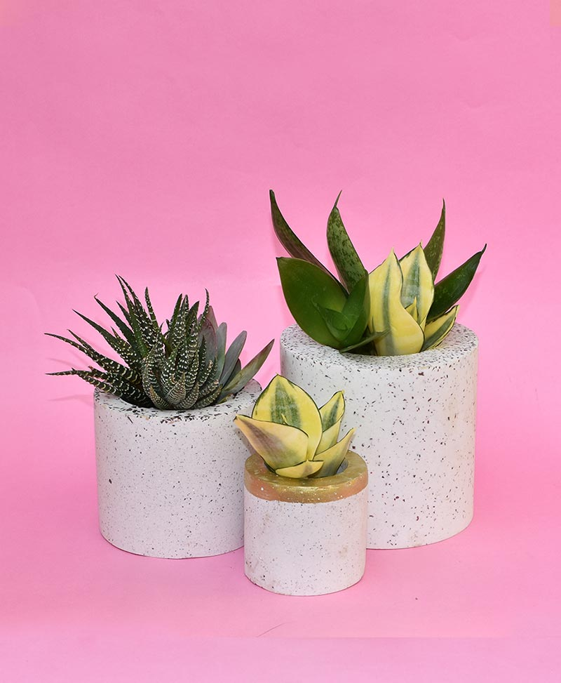 Cluster of Geometric Concrete Planter Cylinder
